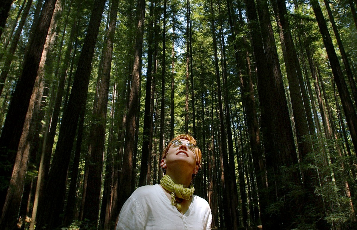 Walk among centuries old redwoods at Armstrong Woods State Park near Guerneville. (Kent Porter / The Press Democrat)