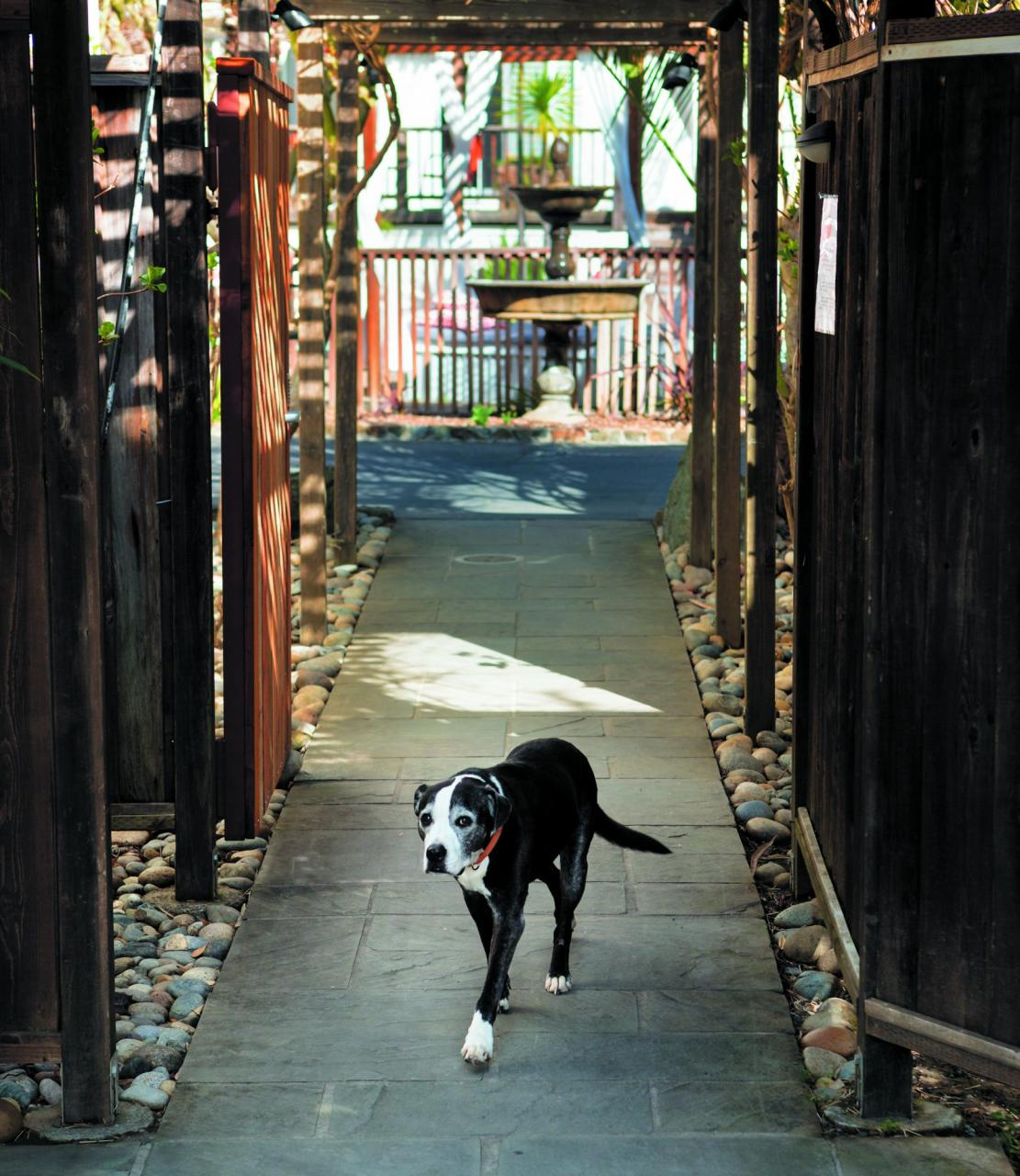 Luedtke's dog, Boon, for whom she named both her restaurant and hotel, walks down the hotel's front entry path.