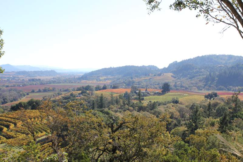 15. Take Mom to West Wines Vineyard's Hike & Wine Tasting. From 11 a.m. to noon, enjoy a walk around the vineyard while tasting their wines. $15 per person, see more information at www.westwines.com/events. (Courtesy / West Wines Vineyard)