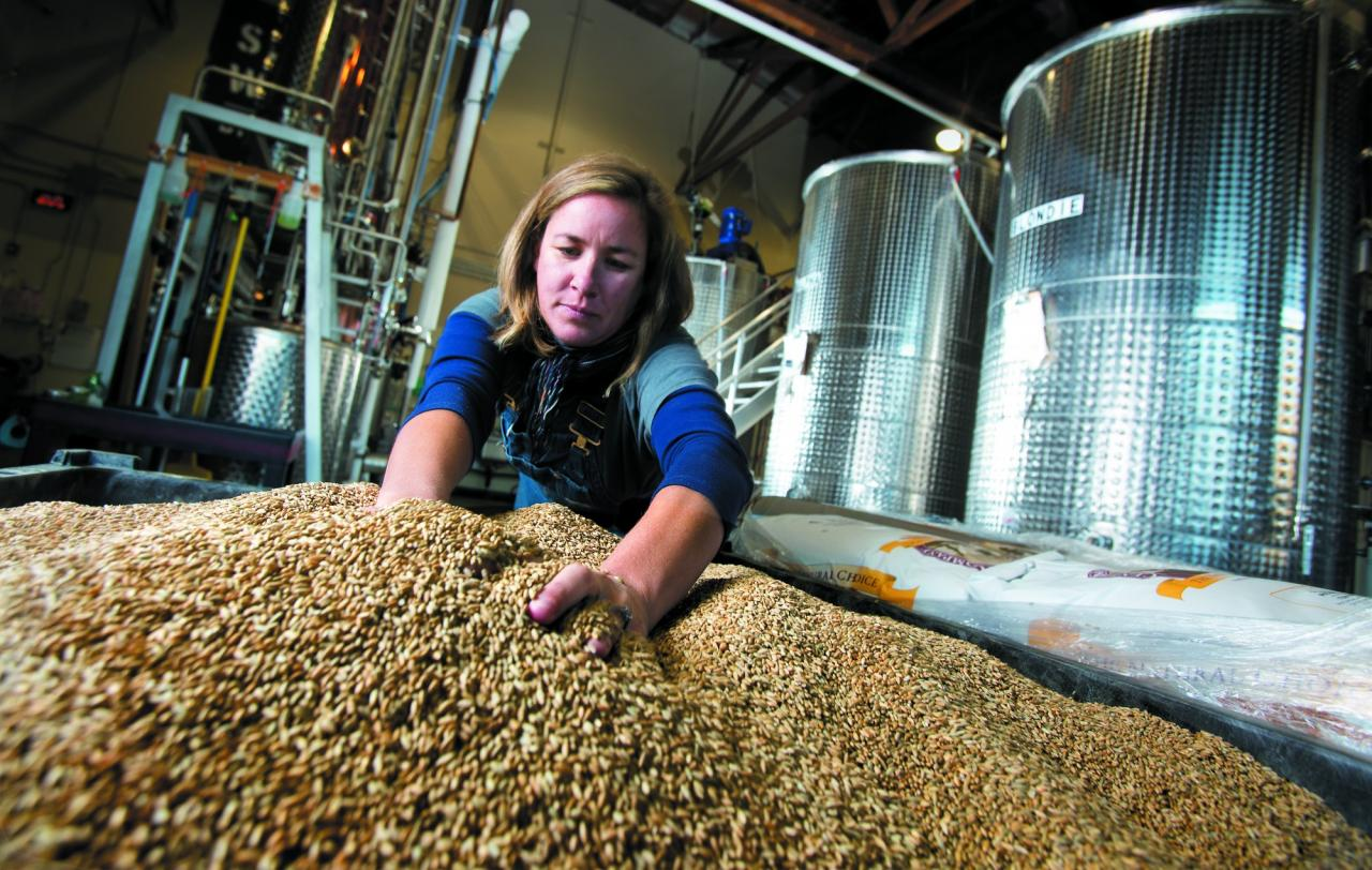 Ashby Marshall measures out whole grains before creating the mash for the gin, whiskey and vodka produced at Spirit Works Distillery in Sebastopol. (Photo by John Burgess)