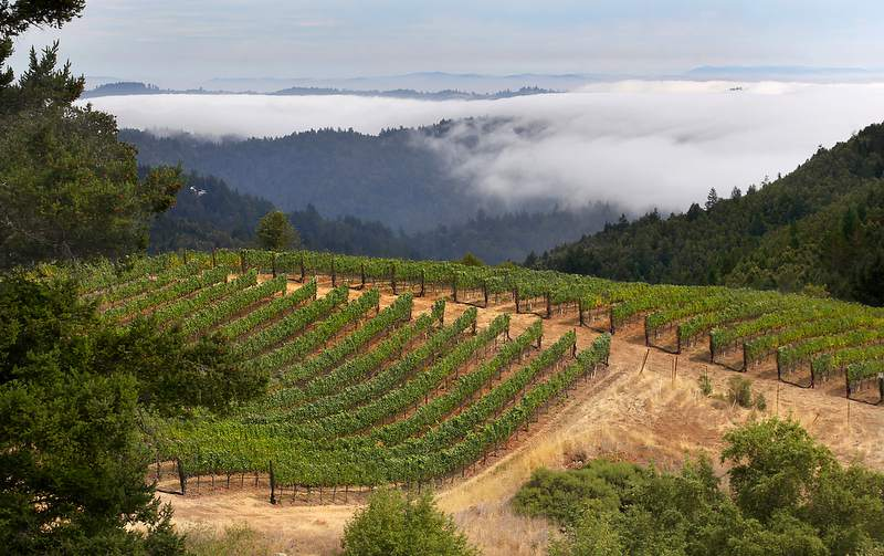 Sonoma county beats napa valley as top winery destination for Best time to visit napa valley wine country