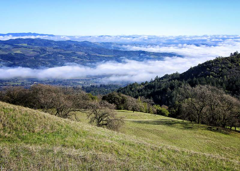 View from near the summit of Sonoma Mountain toward the east, and the foggy valley of Sonoma. (Photo by Deborah Large)