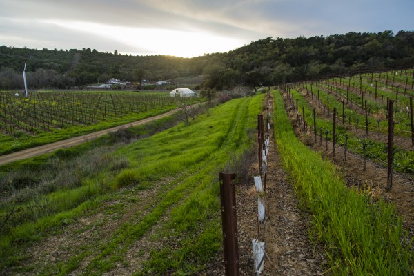 Single Thread Farms Restaurant in Healdsburg (Jason Jaacks)