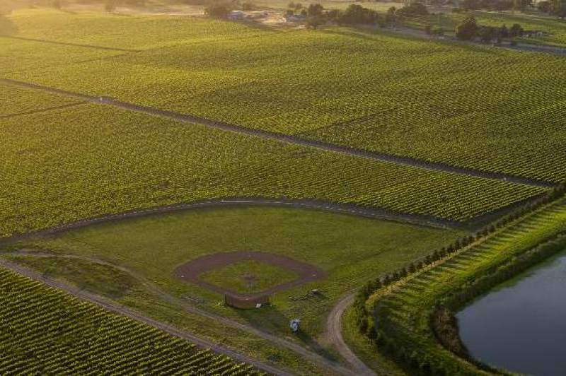 Hidden Santa Rosa Field Of Dreams Surrounded By Vineyards