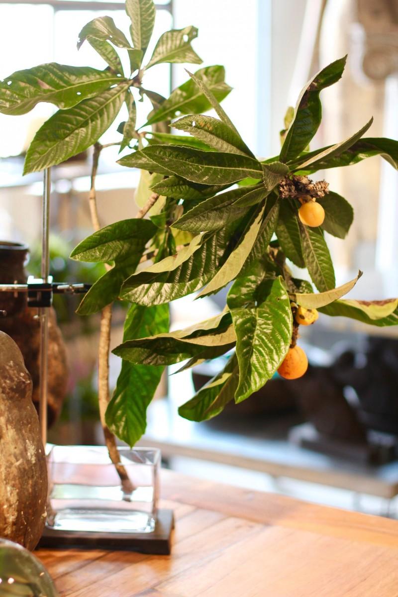 Artefact Curator Floral Clamp