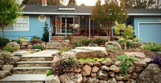 A 1942 suburban home updated with a drought resistant front yard. (Image courtesy of Dante Silliman)