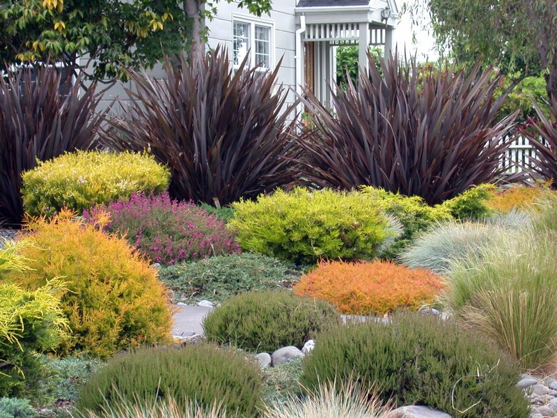 Create a beautiful drought resistant front yard for Small decorative grasses