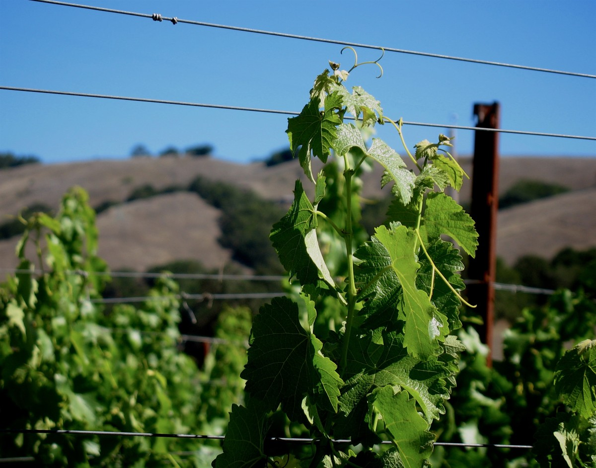 The (Photo Courtesy of Grieve Family Winery)