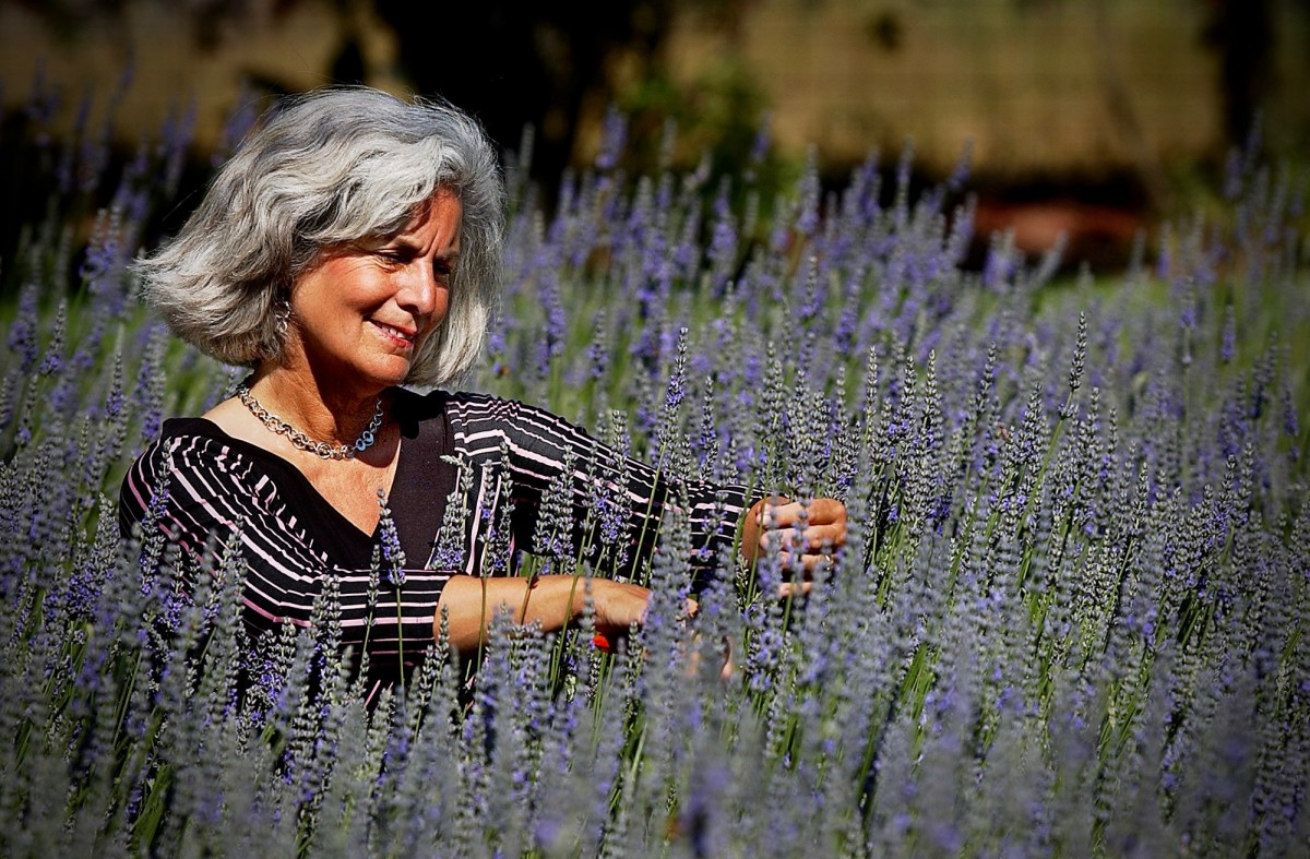Jo Ann Wallenstein in the lavender fields at her Petaluma farm. Her husband, Rick, has bees that pollinate the flowers and make lavender-flavored honey. (Jeff Kan Lee / The Press Democrat)