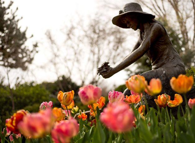 CA-Sonoma-Ferrari-Carano-Tulips-girl