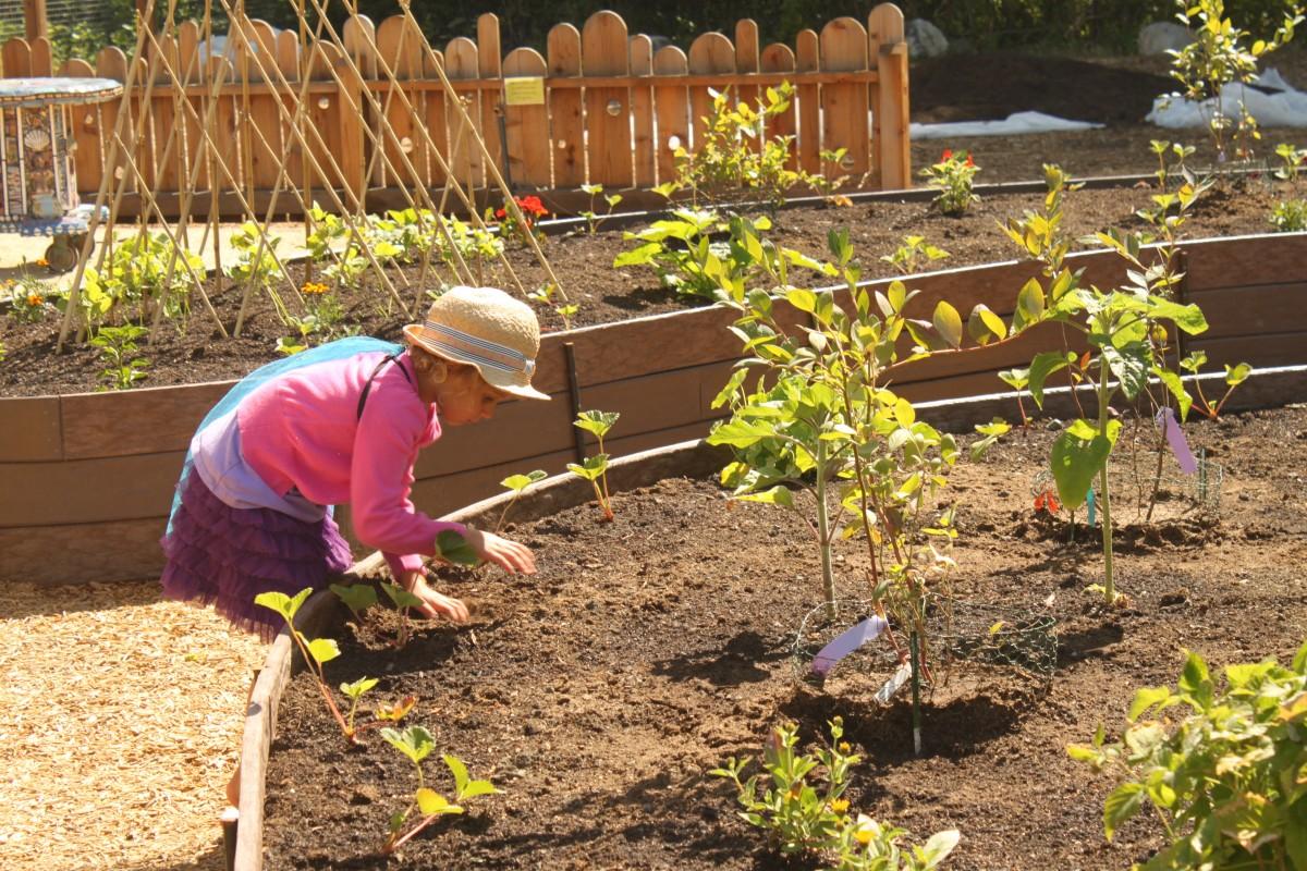 12 refreshing ideas for sonoma summer for Learn landscape design