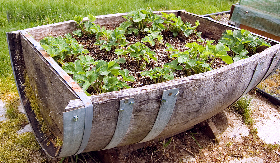Growing Vegetables In Containers 5 easy ways to create a stunning vegetable garden barrel workwithnaturefo