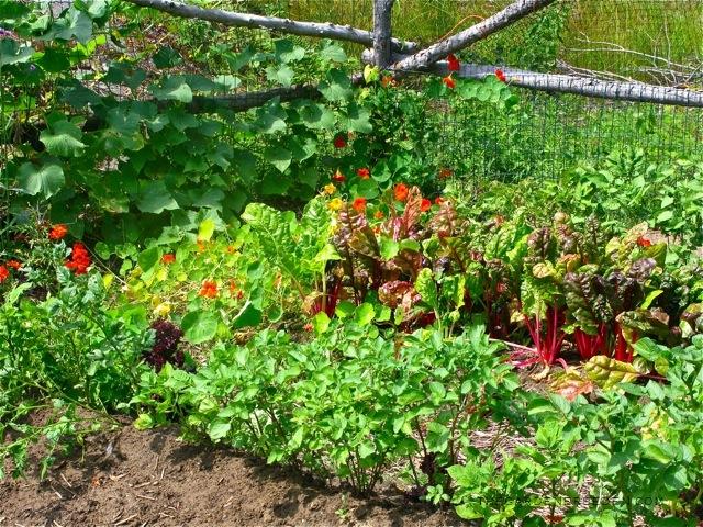 Gardeners Eden