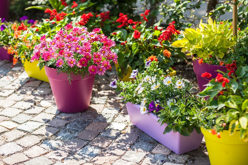 flower pots using a variety of small containers - Container Garden Design Ideas