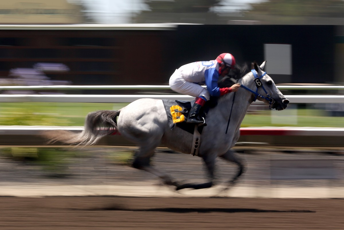 ugo Herrera races Es Mi Cielo across the finish line in front of the pack to take first place during the first day of horse racing at the Sonoma County Fair in Santa Rosa, Thursday, July 30, 2015. (CRISTA JEREMIASON / The Press Democrat)