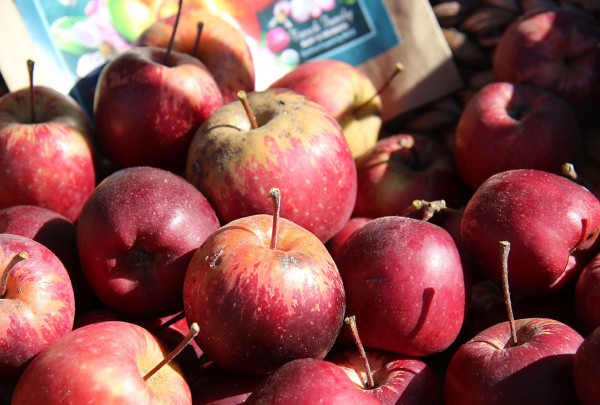 heirloom apples at the Farmer Olympics in 2016.