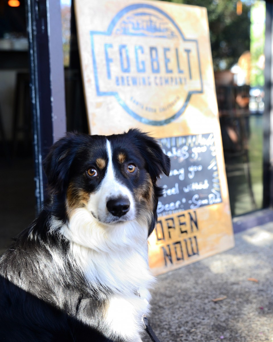 7 Dog-Friendly Breweries in Sonoma County