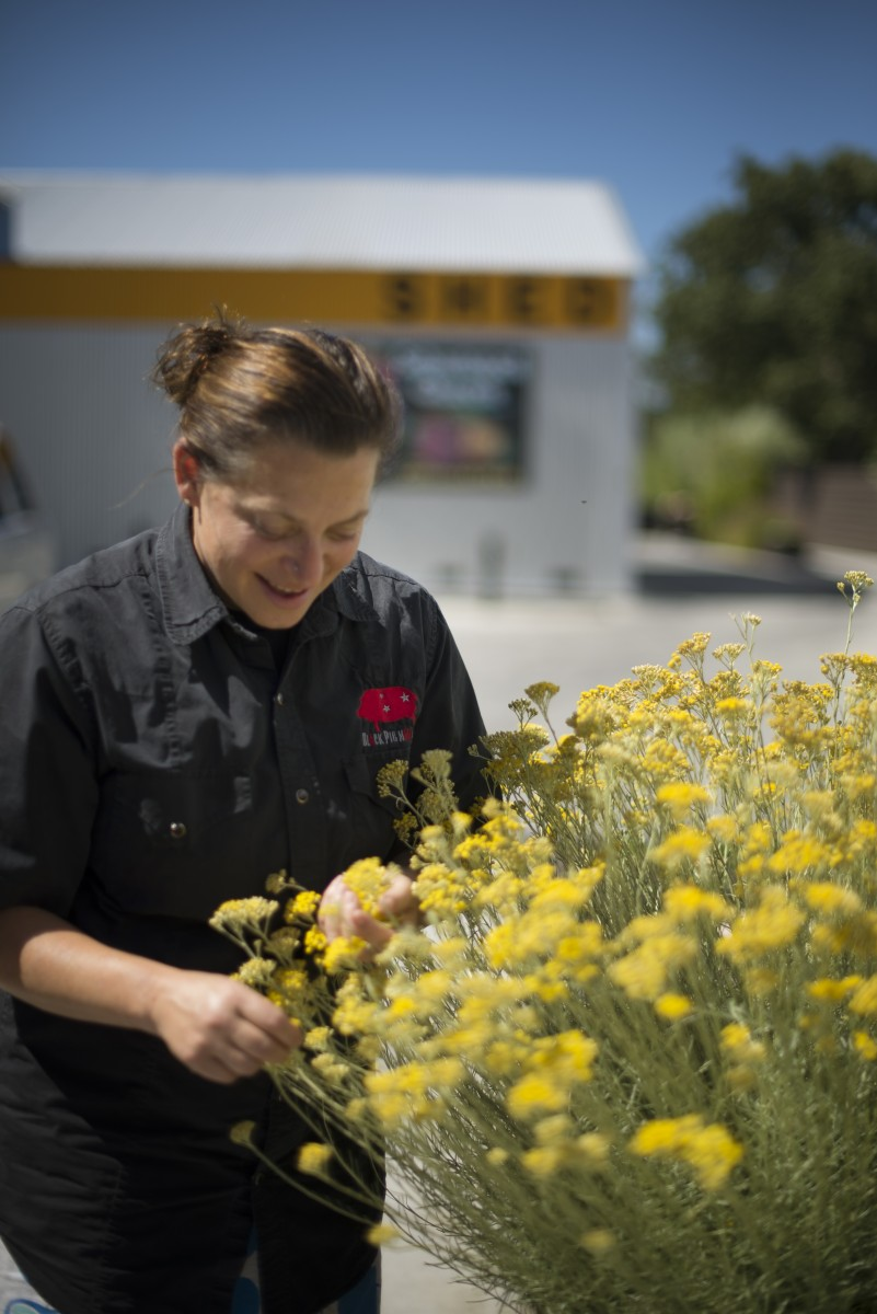 Duskie Estes picking curry blossoms that she uses for roasted cauliflower from her garden near the entrance to zazu kitchen + farm in The Barlow in Sebastopol, California. June 18, 2016. (Photo: Erik Castro/for Sonoma Magazine)