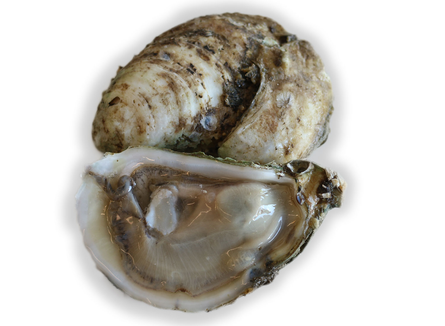Oysters 101: The Shuck, Sip, Slurp Guide to Perfect Oyster Eating ... Oyster Eating Salt