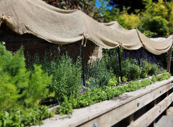 Herb Garden at Revival Restaurant in Guerneville at the Applewood Inn. Photo: Heather Irwin