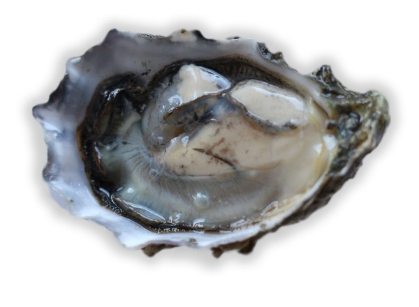 Miyagi oyster at Santa Rosa Seafood. Heather Irwin/PD