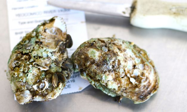 Oysters 101: The Shuck, Sip, Slurp Guide to Perfect Oyster Eating