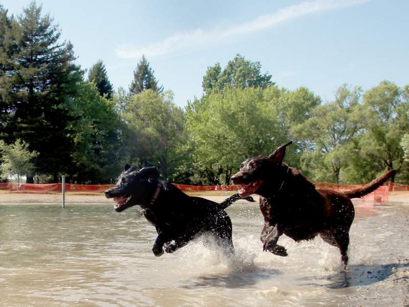 Spring Lake Park's Water Bark starts this Sunday, Sept. 17. (PD FILE)