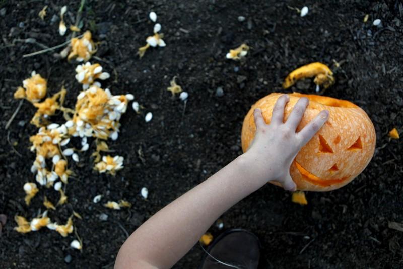 Lyla Runkel, 7, carves a pumpkin during the Pumpkins on Pikes event at Tara Firma Farms in Petaluma, California on Saturday, October 22, 2011. (BETH SCHLANKER/ The Press Democrat) Beth Schlanker
