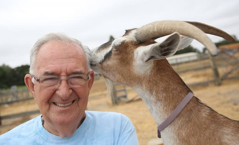 "Jim ""Sparky"" Sparks, owner of 3H Club Goat Farm in Sonoma, gets a kiss from ""Hatty,"" Thursday, July 10, 2014. (Crista Jeremiason / The Press Democrat)"