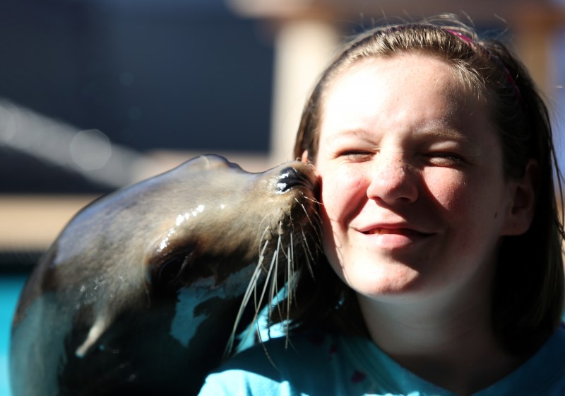 "Ellie Provost, 13, receives a kiss from Cali at Sea Lion Encounters at opening day at the Sonoma County Fair, Thursday, July 24, 2014. ""It was wet,"" Provost said of the kiss. (Crista Jeremiason / The Press Democrat) Sonoma County Fair Crista Jeremiason / The Press Democrat"