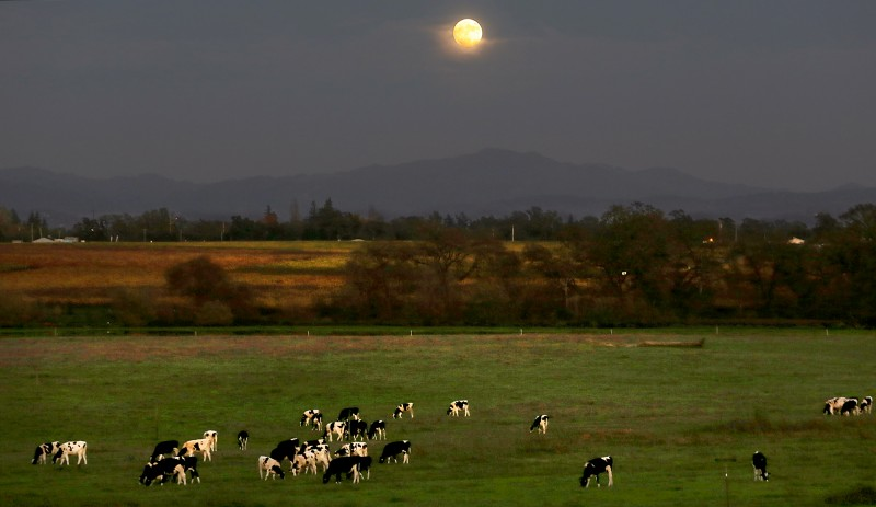 The super moon rises over the Laguna de Santa Rosa, Sunday Nov. 13, 2016 in Santa Rosa. (Kent Porter / The Press Democrat) 2016