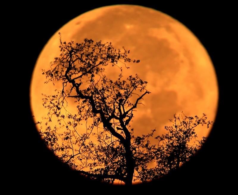 The super moon sets, Monday Nov. 14, 2016 above the Alexander Valley. (Kent Porter / The Press Democrat) 2016