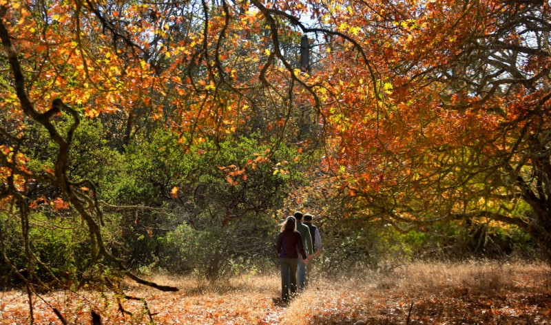 Explore the hiking trails in Annadel State Park.