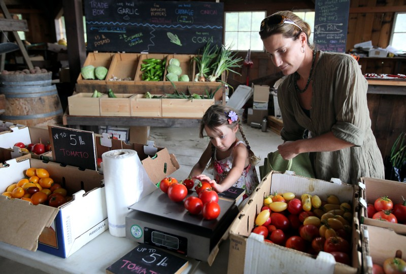 Lisa Schmitt and her daughter Ingrid, 4, weigh their allotment of tomatoes at Foggy River Farm, west of Windsor, on Wednesday, September 5, 2012. Christopher Chung