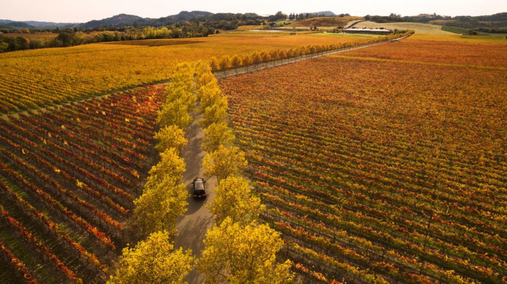 Best Places to Take Out-of-Towners Visiting Sonoma County