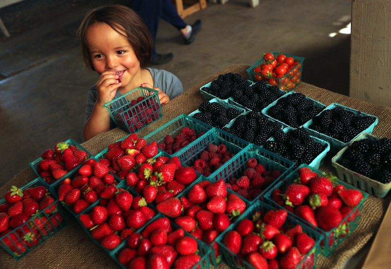 ISO Seo, 3, of Sebastopol samples raspberries while picking up a weekly veggie box with his mother at the Laguna Farm CSA in Sebastopol. (JOHN BURGESS/The Press Democrat) food John Burgess