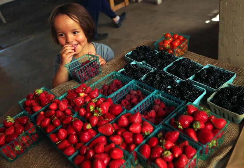ISO Seo, 3, of Sebastopol samples raspberries while picking up a weekly veggie box with his mother at the Laguna Farm CSA in Sebastopol. (JOHN BURGESS/The Press Democrat) food John Burgess
