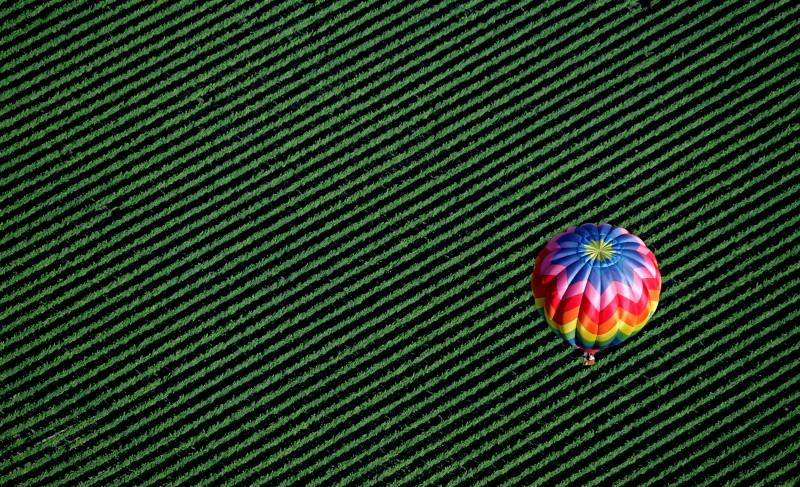 A hot air balloon floats over Windsor vineyards. (Kent Porter)