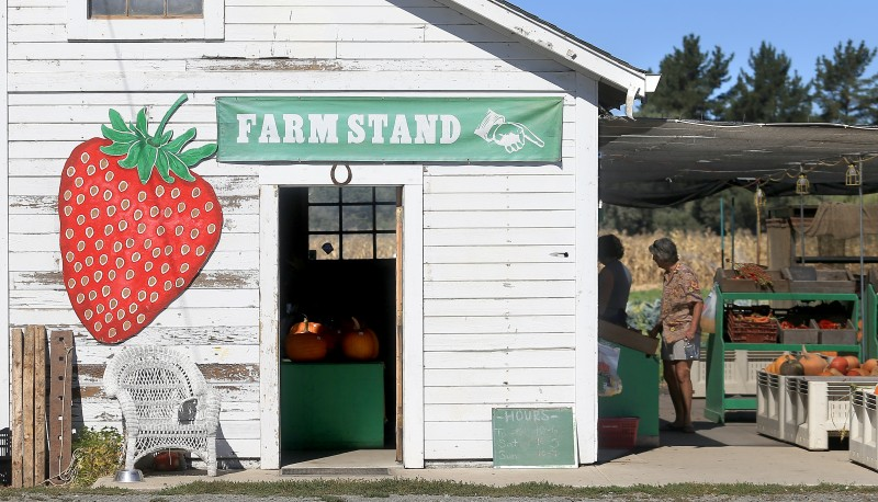 Tierra Vegetables barn, Thursday Oct. 2, 2014 in Santa Rosa. (Kent Porter / Press Democrat) 2014