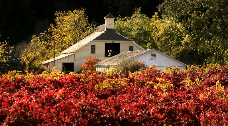 A bucolic scene on Highway 12 in the Valley of the Moon; and oft photographed barn, Wednesday Nov. 18, 2015. (Kent Porter