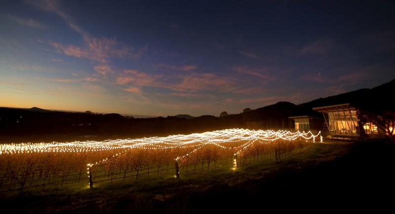 Holiday lights stretch out across the vineyards of Hamel Family Wines in Glen Ellen, Tuesday Dec. 20, 2016. (Kent Porter)