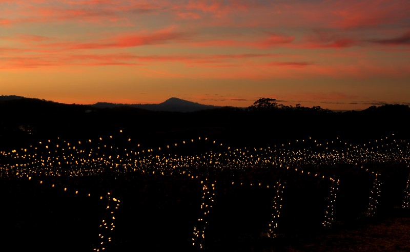 Holiday lights stretch out across the vineyards of Hamel Family Wines in Glen Ellen, Tuesday Dec. 20, 2016. (Kent Porter