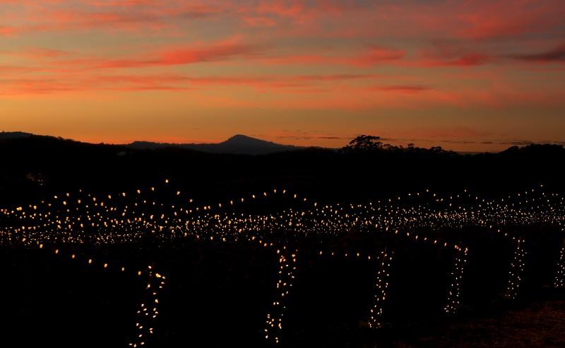 Holiday lights stretch out across the vineyards of Hamel Family Wines in Glen Ellen, Tuesday Dec. 20, 2016. (Kent Porter