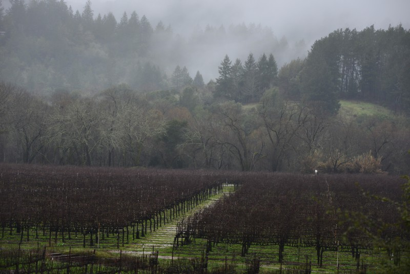 Wet winter weather as seen from the Dry Creek Road in Healdsburg Sunday during the 24th Annual Winter WINEland. January 17, 2016. (Photo: Erik Castro
