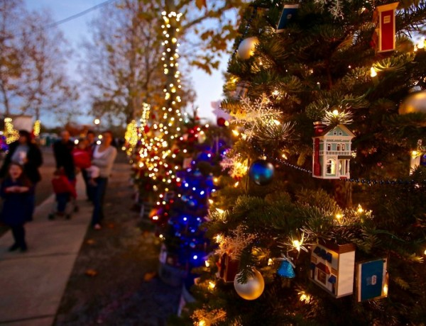 The Charlie Brown Tree Grove has 184 holiday trees on display at the Windsor Town Green.   Crista Jeremiason