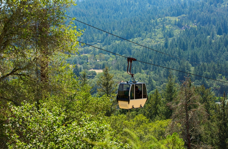 A one-of-a-kind aerial tram glides on a scenic ride up a tree covered hill to Sterling Vineyards.