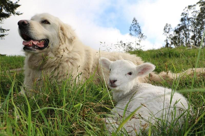 Sonoma Wool Company / Sonoma County Farm Trails