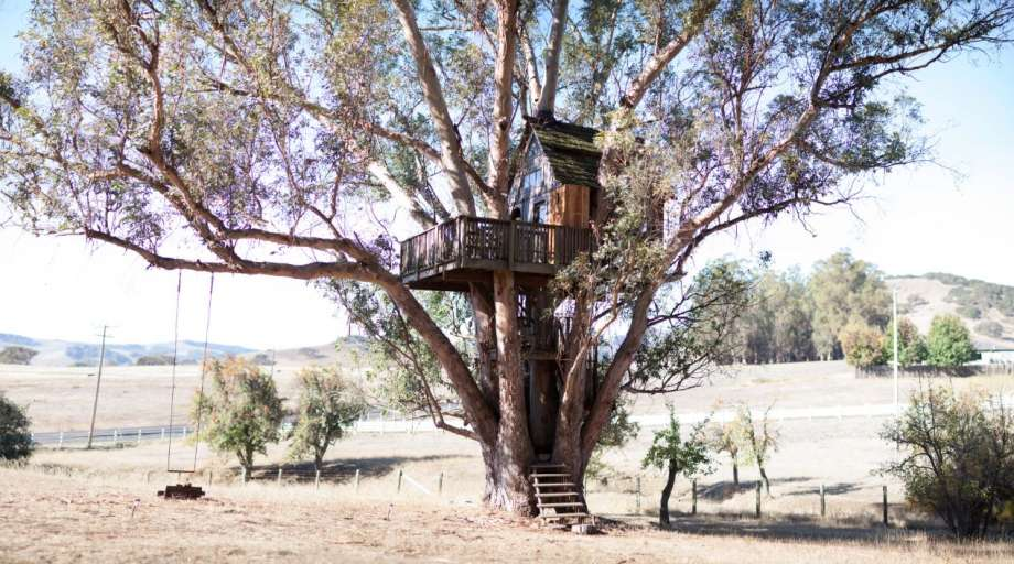 Located in a eucalyptus grove a stone's throw from Petaluma, this treehouse is nestled securely in a multi-trunked 110-foot tree.