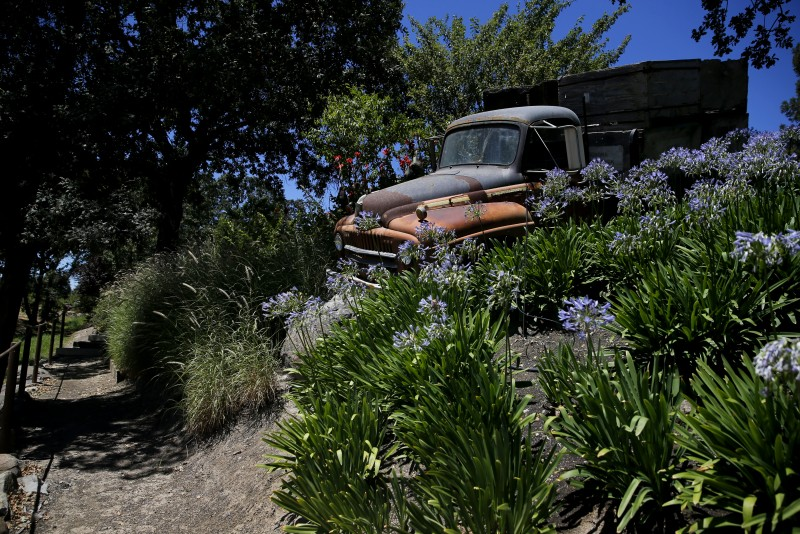 The walking tour path at La Crema takes visitors past an old vineyard truck Richard Kunde tucked into the lush landscape. (Beth Schlanker)