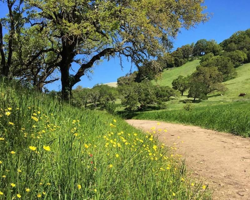 Sonoma Valley Regional Park. (Adrienne Shubin)